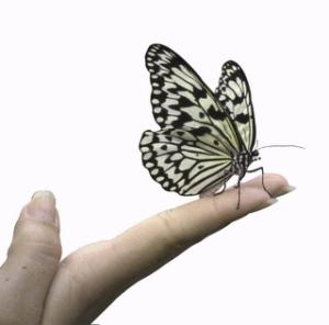 [borboleta+na+mão.png]